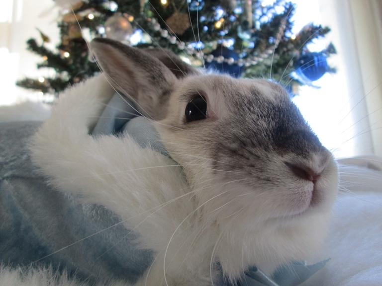 blue-christmas-celeste